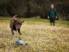 George Ashcroft Training his dog.