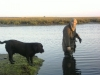 Ronnie Mason wildfowling with Jet at Lindisfarne.
