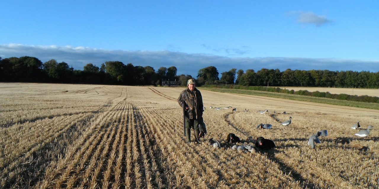 Goose Shooting in The Scottish Borders